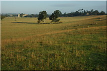 SO8843 : Croome Landscape Park by Philip Halling