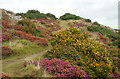 SM8024 : Circular walk from Solva to St Elvis and Dinas Fawr (4) by Andy F