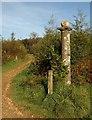 SX5359 : Column, Cann Wood by Derek Harper