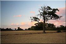 TL8063 : Late evening at Little Saxham by Bob Jones