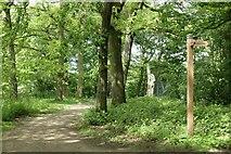 SJ6675 : Woodland near Neumann's flash by Galatas