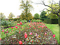 TQ3876 : Greenwich Park: rose garden by Stephen Craven