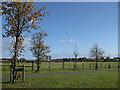 NZ2466 : Town Moor by Pauline E