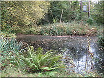 TQ0223 : Pond near the entrance to Crimbourne House and Stud Farm by Dave Spicer