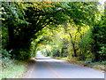 SP1029 : Cotswold avenue in autumn by Jonathan Billinger