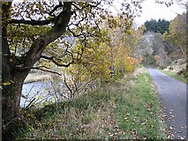 NS8206 : Quiet road beside the Nith by Oliver Dixon