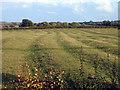 TL0874 : Medieval ridge and furrow, Catworth, Hunts by Rodney Burton