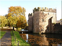 ST5545 : Wells: autumn tree by the Bishop's Palace moat by Chris Downer