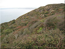 SX1698 : Long Cliff by Philip Halling