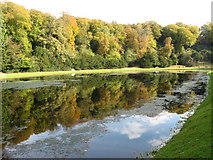 SE2768 : River Skell in early Autumn by Alan Hawkes