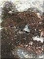 NS3178 : A lichen - Rimularia furvella by Lairich Rig
