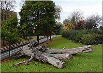 SO9098 : Linear Park inside Wolverhampton Ring Road by Roger  Kidd