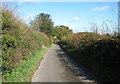 TG2600 : View north along Leafy Oak Lane by Evelyn Simak