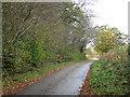 TM2599 : Approaching Wolferd Green on Grub Street by Evelyn Simak