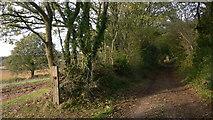 SU7824 : Byway near Durleighmarsh Farm by Shazz