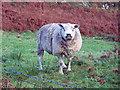 NG1750 : A shig or a peep? by Richard Dorrell