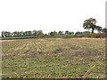 SJ7965 : Stubble in a field off Davenport Lane by Stephen Craven