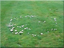 NT0879 : Fairy ring and fairy clubs at Hopetoun House by M J Richardson