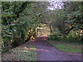 SS9712 : Old railway track, now a cyclepath by Rob Purvis