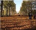 TQ2979 : Tree Lined Path - Green Park by Paul Gillett