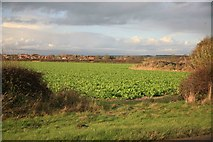 SK6889 : Mattersey Thorpe in the distance by roger geach
