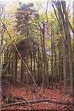 TQ4660 : Hayman's Wood by David Anstiss
