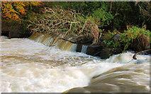 J3267 : The Eel Weir,  Edenderry (4) by Albert Bridge