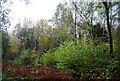 TQ7413 : Fore Wood by N Chadwick