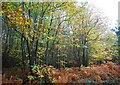 TQ7412 : Autumnal Colours, Fore Wood by N Chadwick