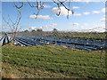 TF4503 : Strawberry fields by Hugh Venables