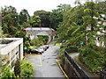 J3371 : Trees at Stranmillis University College Campus by David Hawgood