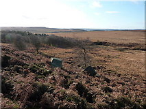 SK2775 : Looking south from a point near the stone circle by Peter Barr