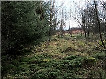 NS8384 : Course of a Roman road by Lairich Rig