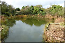 TQ8068 : A wildlife pond at Riverside Country Park by pam fray