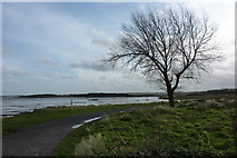 TQ8068 : Footpath by Eastcourt Meadows, Riverside Country Park by pam fray