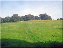 SK4564 : Hardwick Park by Trevor Rickard