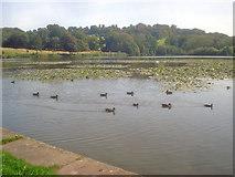 SK4563 : Great Pond - 2 by Trevor Rickard