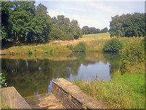 SK4563 : Row Pond - 2 by Trevor Rickard