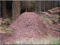 SX8795 : Ant hill by Brian Henley
