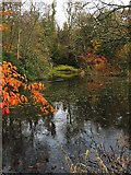 NS3578 : Pond in Kilmahew Estate by Lairich Rig