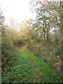 TG2102 : Autumn colours on the path to Mangreen by Evelyn Simak