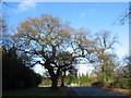 SP3076 : Oaks, Cannon Hill Road by E Gammie