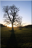 TL8162 : Sun going down in Ickworth Park by Bob Jones