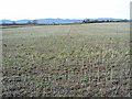 SO8240 : Large field at Upper Hook by Trevor Rickard