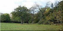 ST2896 : Split trunk oak in a field adjacent to Ty Pwca Road, Cwmbran by Jaggery