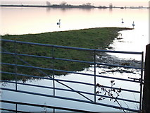 TL4279 : A hint of pink - The Ouse Washes at Sutton Gault by Richard Humphrey