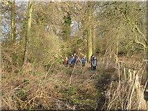 NZ2115 : Walkers coming through Kathleen Wood, Piercebridge by Philip Barker
