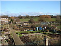 TQ5590 : Archibald Road Allotments by Ian Paterson