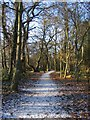 SP2873 : Path, Crackley Wood by E Gammie
