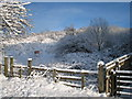 NZ5415 : Snow at Flatts Lane Woodland Country Park by Philip Barker
